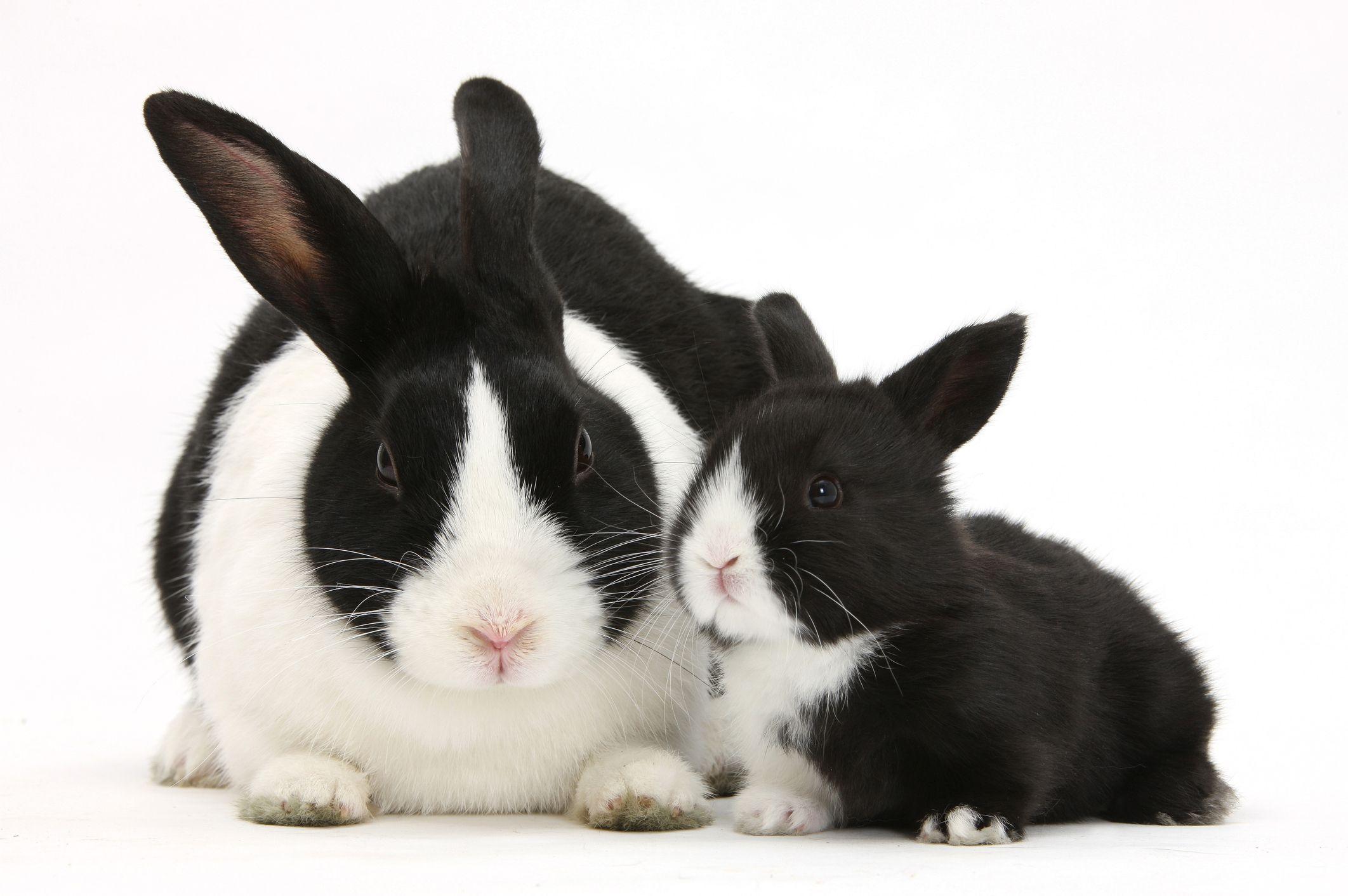 20 Types of Pet Rabbits — Having Rabbits as Pets