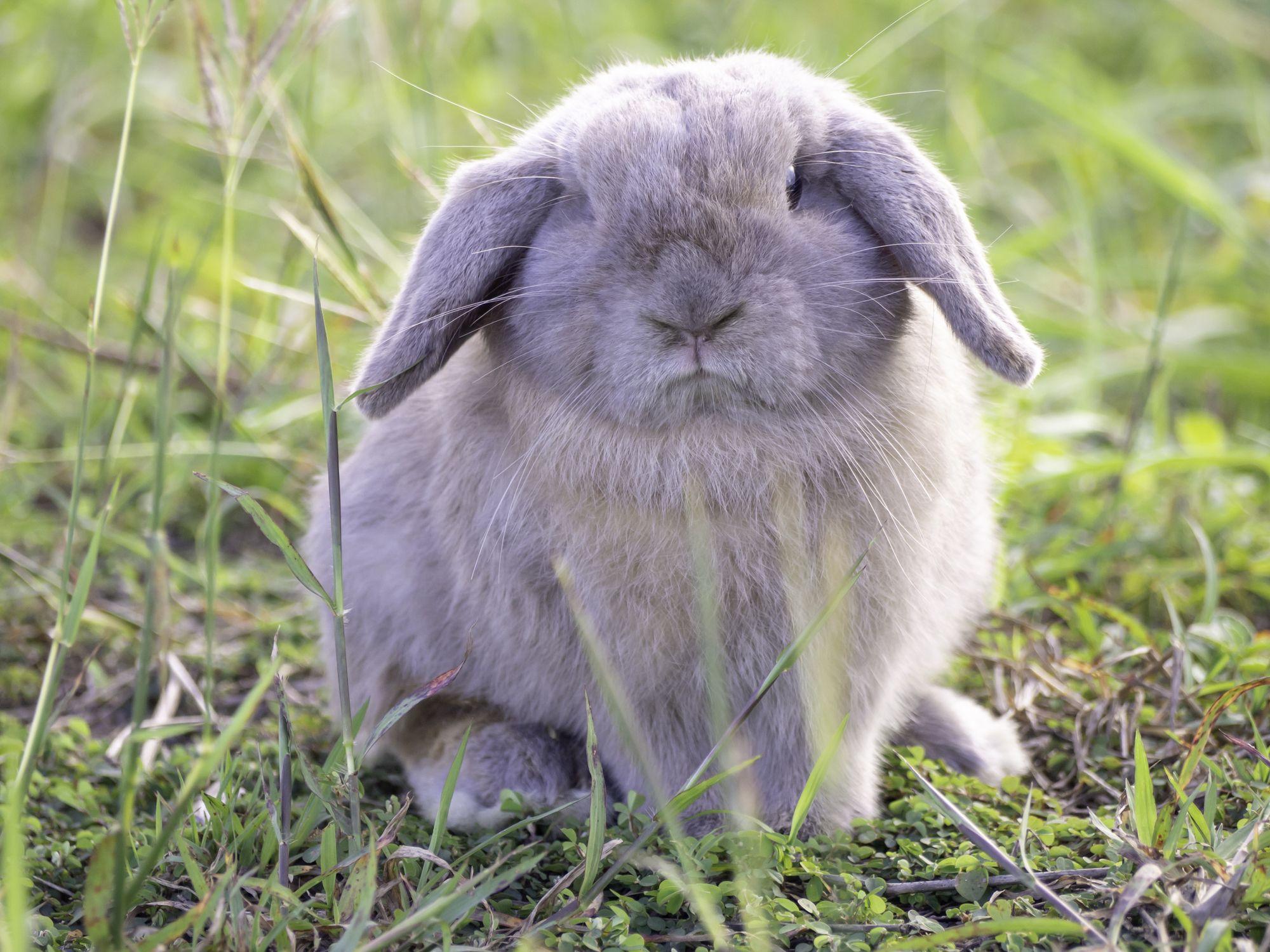 15 Types Of Pet Rabbits Having Rabbits As Pets