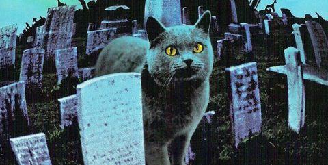 Cat, Felidae, Small to medium-sized cats, Whiskers, Illustration, Graphic design, Black cat, Carnivore, Wild cat, Art,