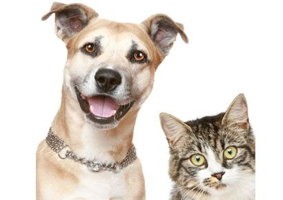 Dog breed, Whiskers, Vertebrate, Carnivore, Dog, Small to medium-sized cats, Collar, Facial expression, Cat, Felidae,