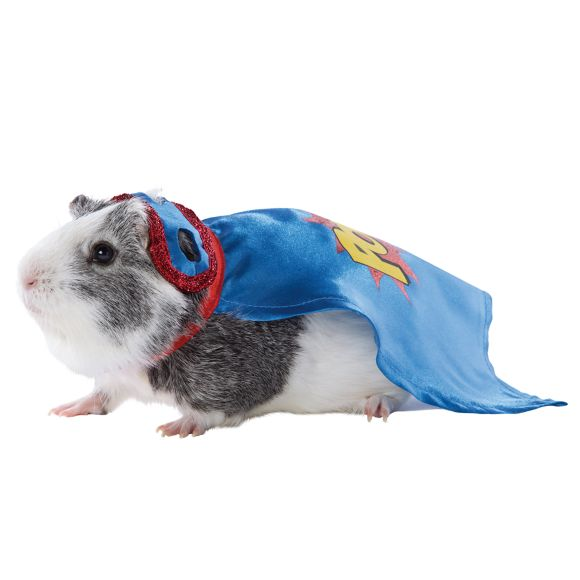 PetSmart Just Released Incredibly Adorable Guinea Pig Halloween Costumes