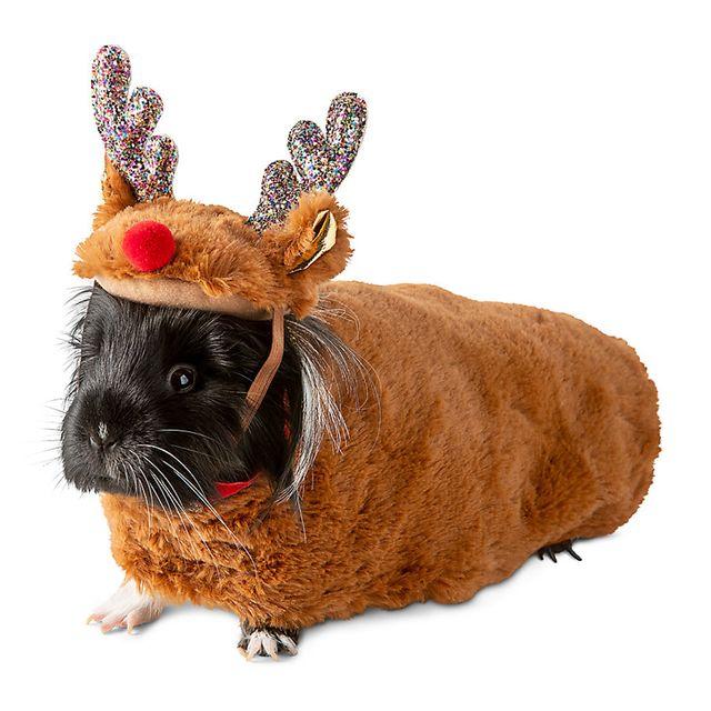 petsmart merry  bright guinea pig christmas costume