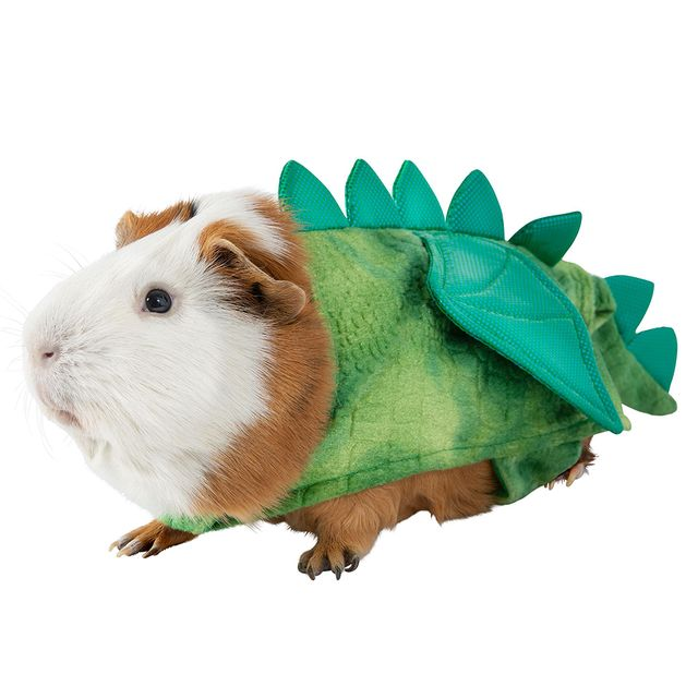 PetSmart Is Selling Halloween Costumes for Guinea Pigs, So ...