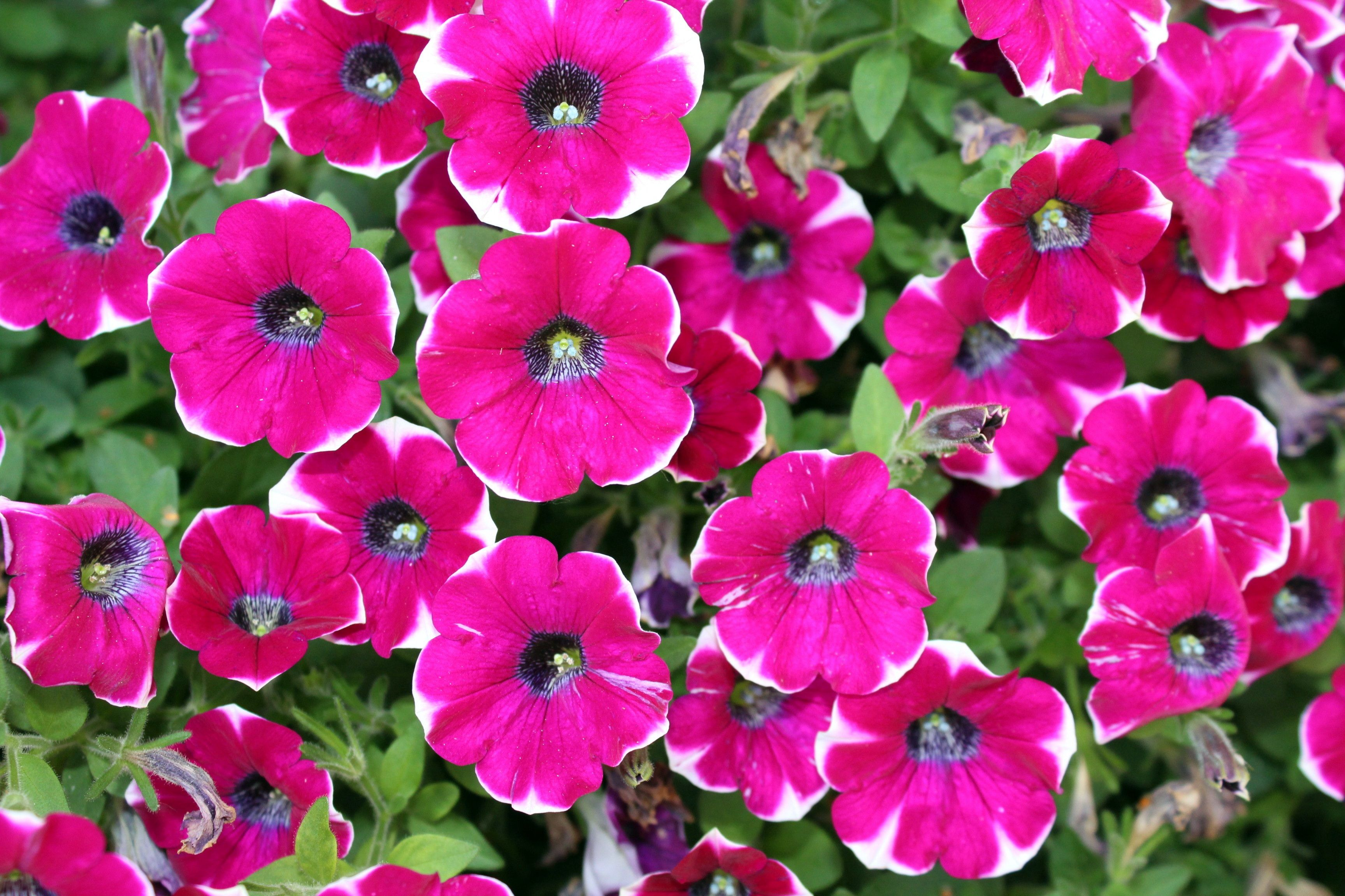 7 Of The Fastest Growing Flower Seeds For Your Garden This Summer