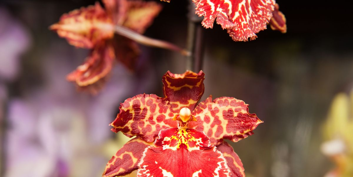 Kew Gardens Orchid Festival 2019 Dates And Tickets Info Kew Gardens London