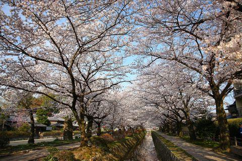 Philosopher's Walk in Kyoto Japan
