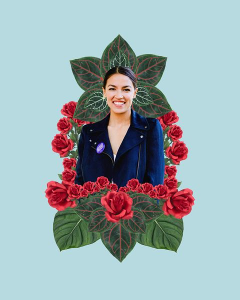Flower, Plant, Leaf, Illustration, Cut flowers, Petal, Wreath, Floral design, Art,