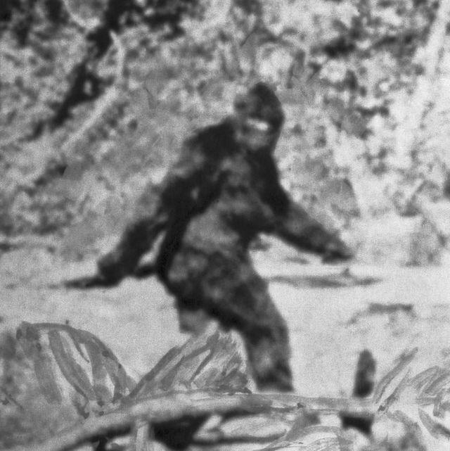 alleged photo of bigfoot