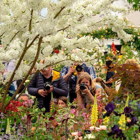 Austin Home And Garden Show 2020.Chelsea Flower Show 2020 Tickets Dates And What Gardens To See