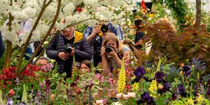 Press Day At The Chelsea Flower Show
