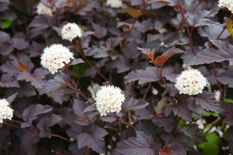 The 10 Best Evergreen Flowering Shrubs