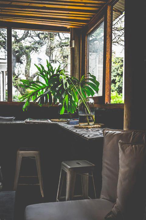 Piante d appartamento anti stress le migliori da tenere in casa - Piante da tenere in casa ...