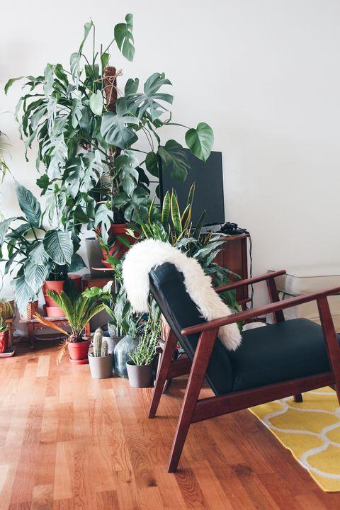 Piante Da Appartamento Utili.Piante Da Appartamento Che Depurano L Aria