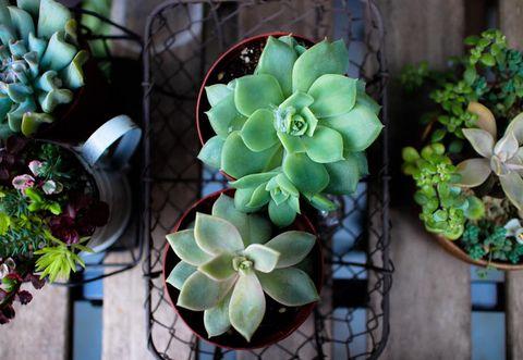 5 piante grasse da appartamento facili da curare - Piante grasse in casa ...