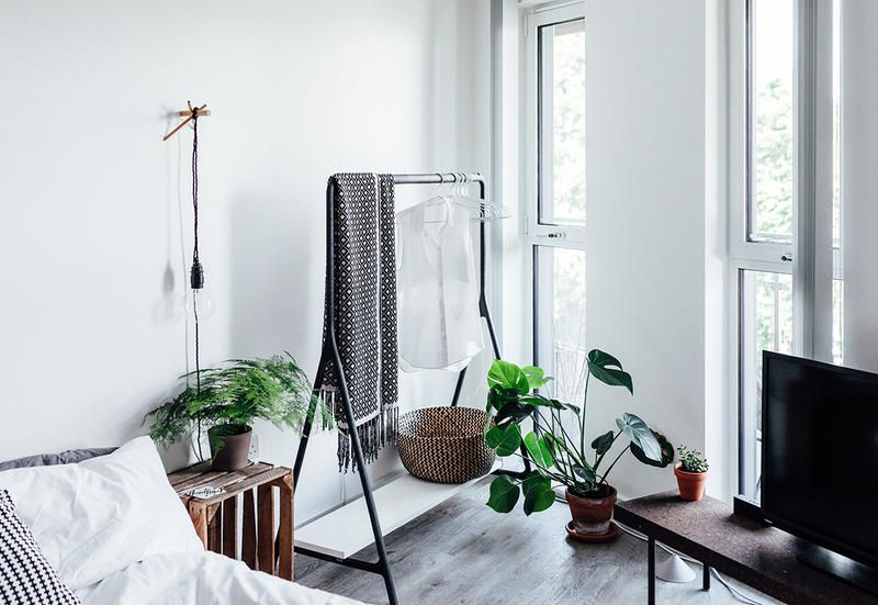 The Best Indoor Plants To Purify The Air In Your Bedroom