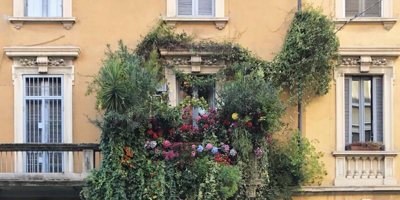 5 piante rampicanti da balcone for Piante rampicanti da balcone