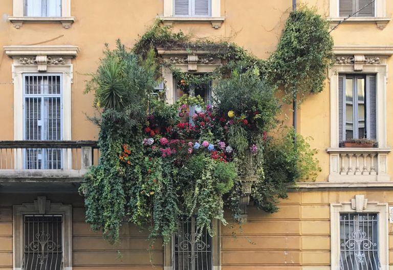 5 piante rampicanti da balcone
