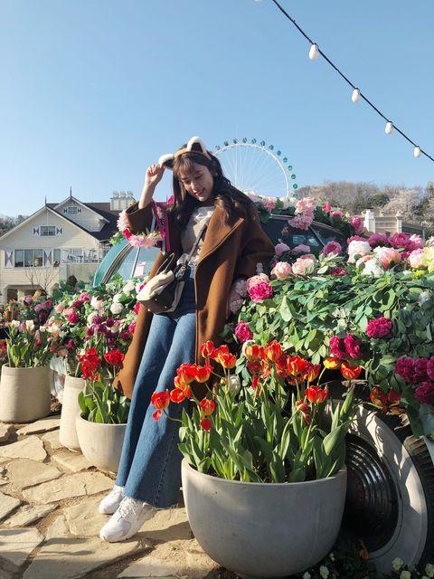 Flower, Plant, Floristry, Botany, Floral design, Spring, Flower Arranging, Flowerpot, Tulip, Vacation,