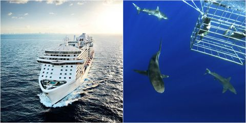 Whale shark, Naval architecture, Vehicle, Ship, Watercraft, Ocean, Cruise ship, Boat, Ocean liner,