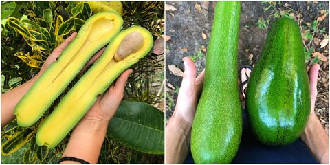 Summer squash, Vegetable, Cucumber, gourd, and melon family, Plant, Squash, Zucchini, Natural foods, Food, Winter squash, Local food,