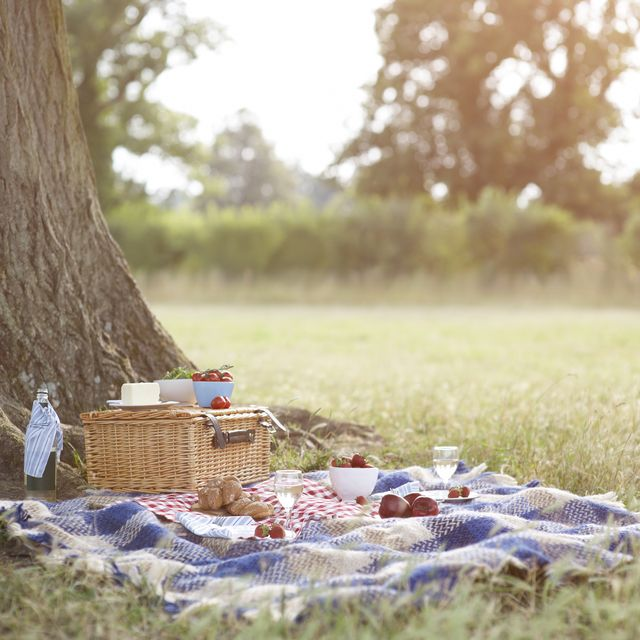 picnic and hamper beside tree in meadow