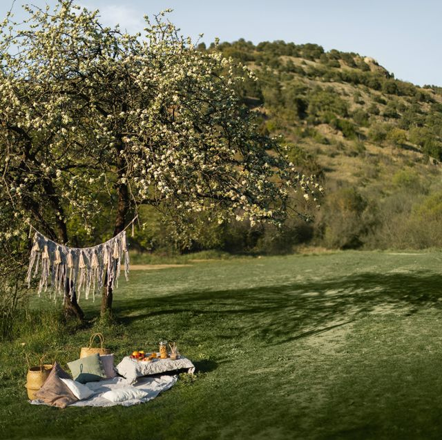 best picnic sets and accessories for outdoor dining