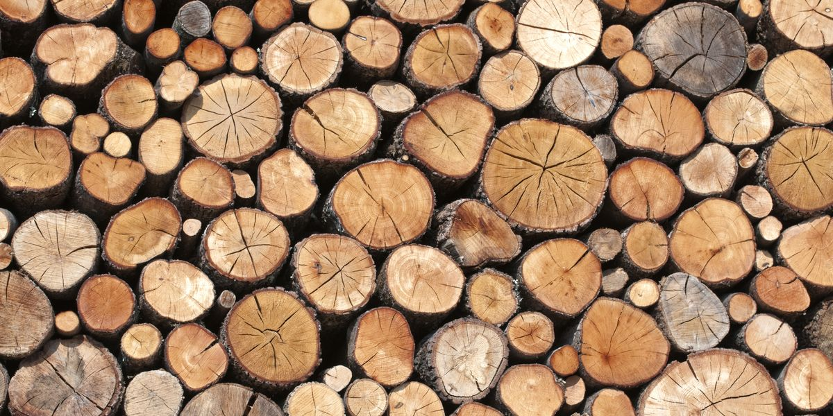 8 Kinds Of Wood You Not To Burn Bad Firewood You Should