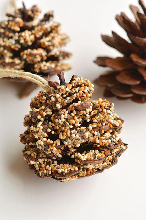 pine cone bird feeder pine cone crafts