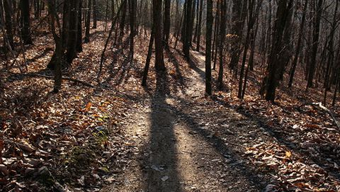 MTB trails: photo of the Pinhoti Trails in Ellijay, Georgia