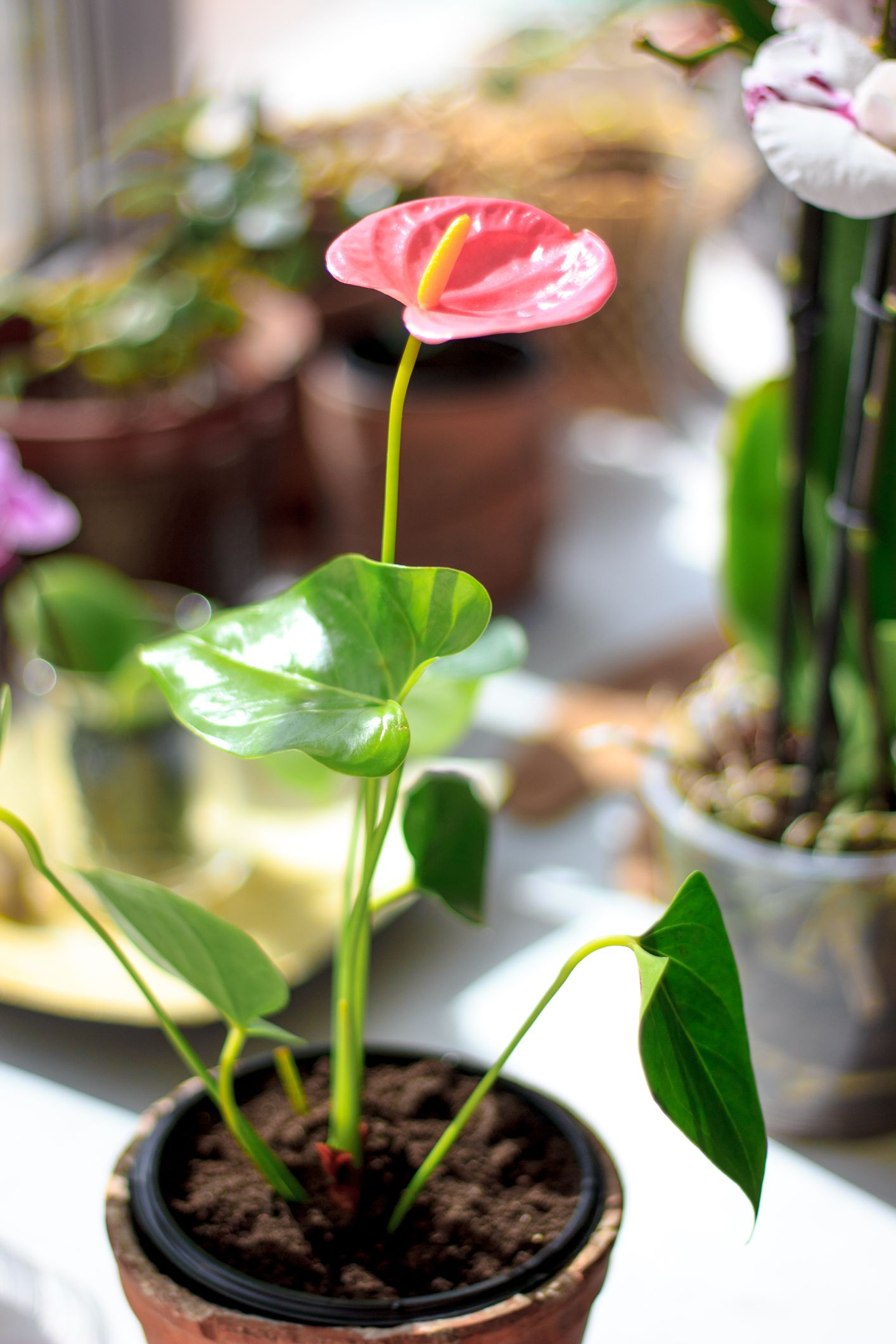 30 Indoor Plants for the Small-Space Gardener, and How to Care for Them