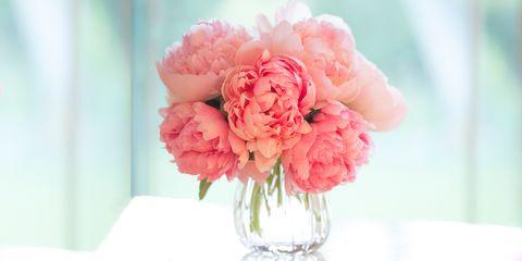 Flower, Pink, Cut flowers, common peony, Petal, Plant, Flowering plant, Peony, Bouquet, Carnation,