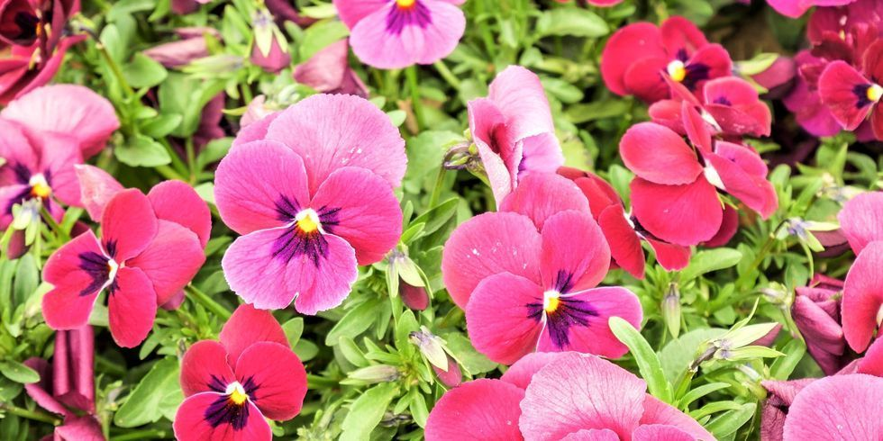 Autumn Flowering Plants For Your Garden, What Is The Usual Meaning Of Term Bedding Plant