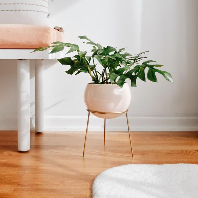 30 best plant stands for displaying your plants