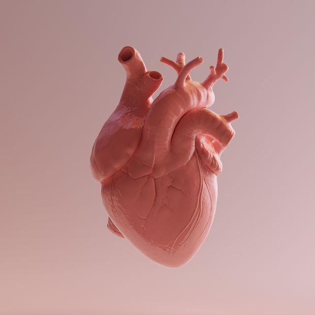 pink porcelain anatomical heart