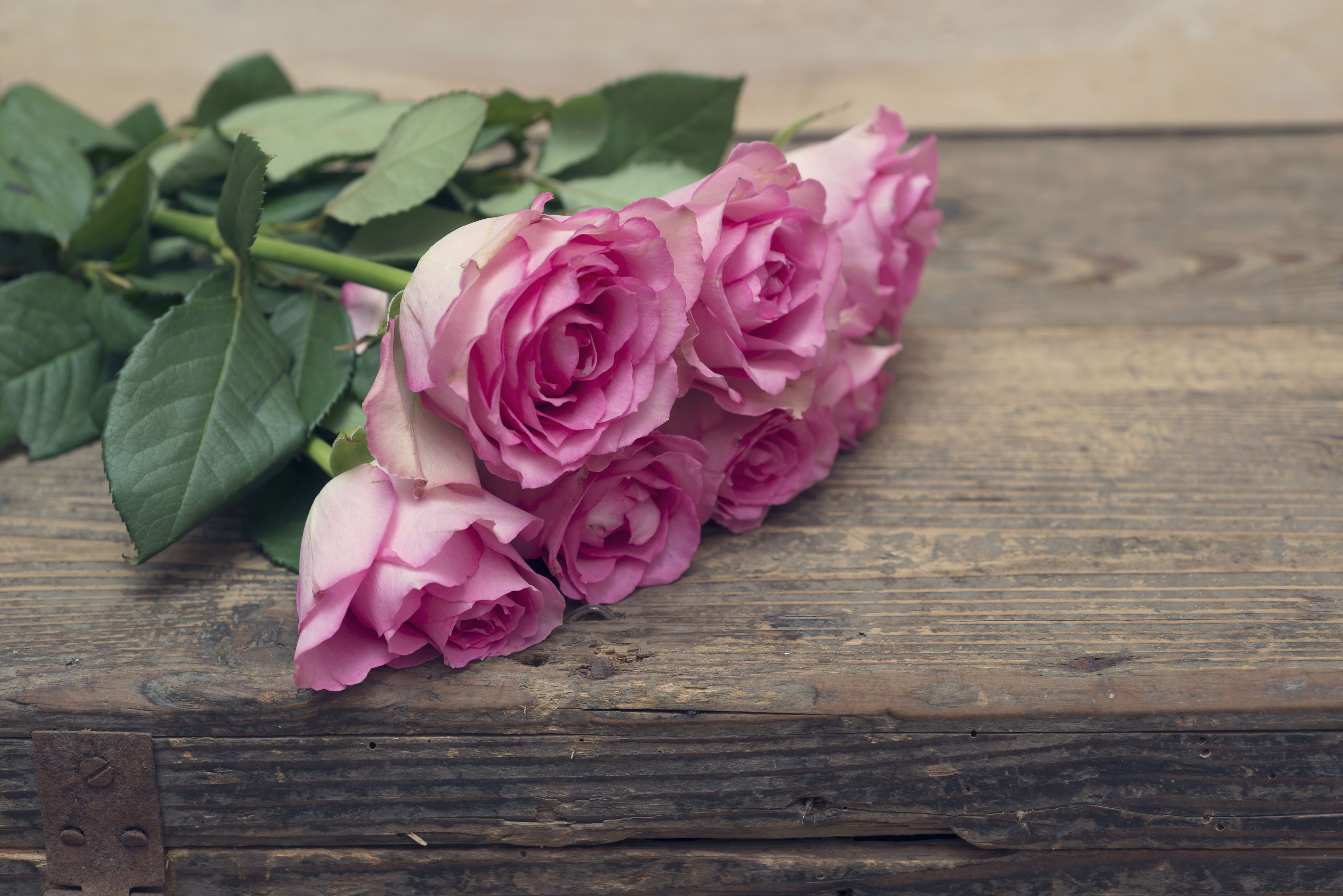 16 Romantic Flower Meanings Symbolism Of Different Kinds Of