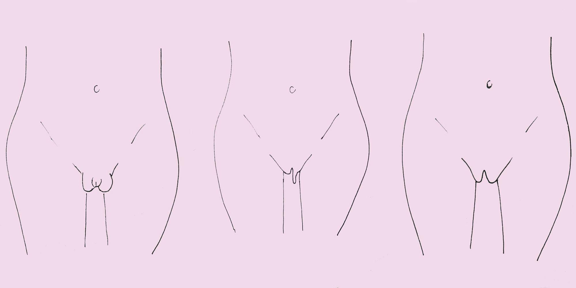 Pictures of a normal vulva vulva pictures vulva
