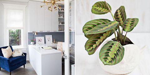 Houseplant, Green, Leaf, Plant, Monstera deliciosa, Flower, Room, Interior design, Arrowroot family, Terrestrial plant,