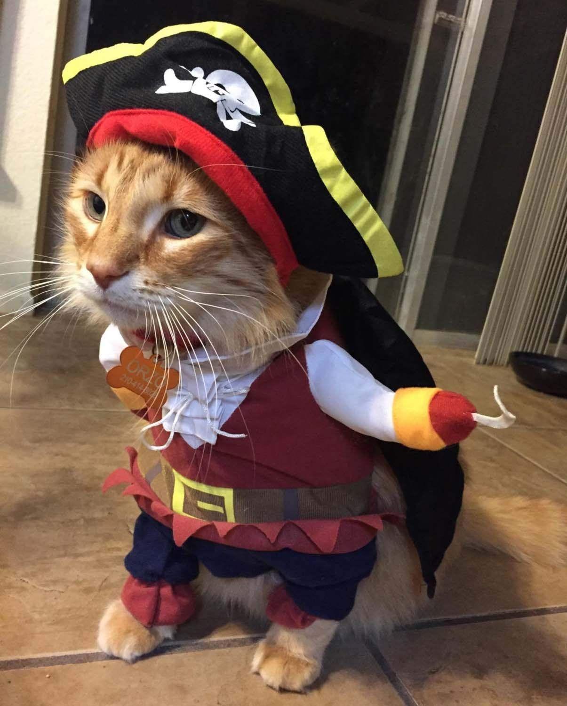pirate cat halloween costume