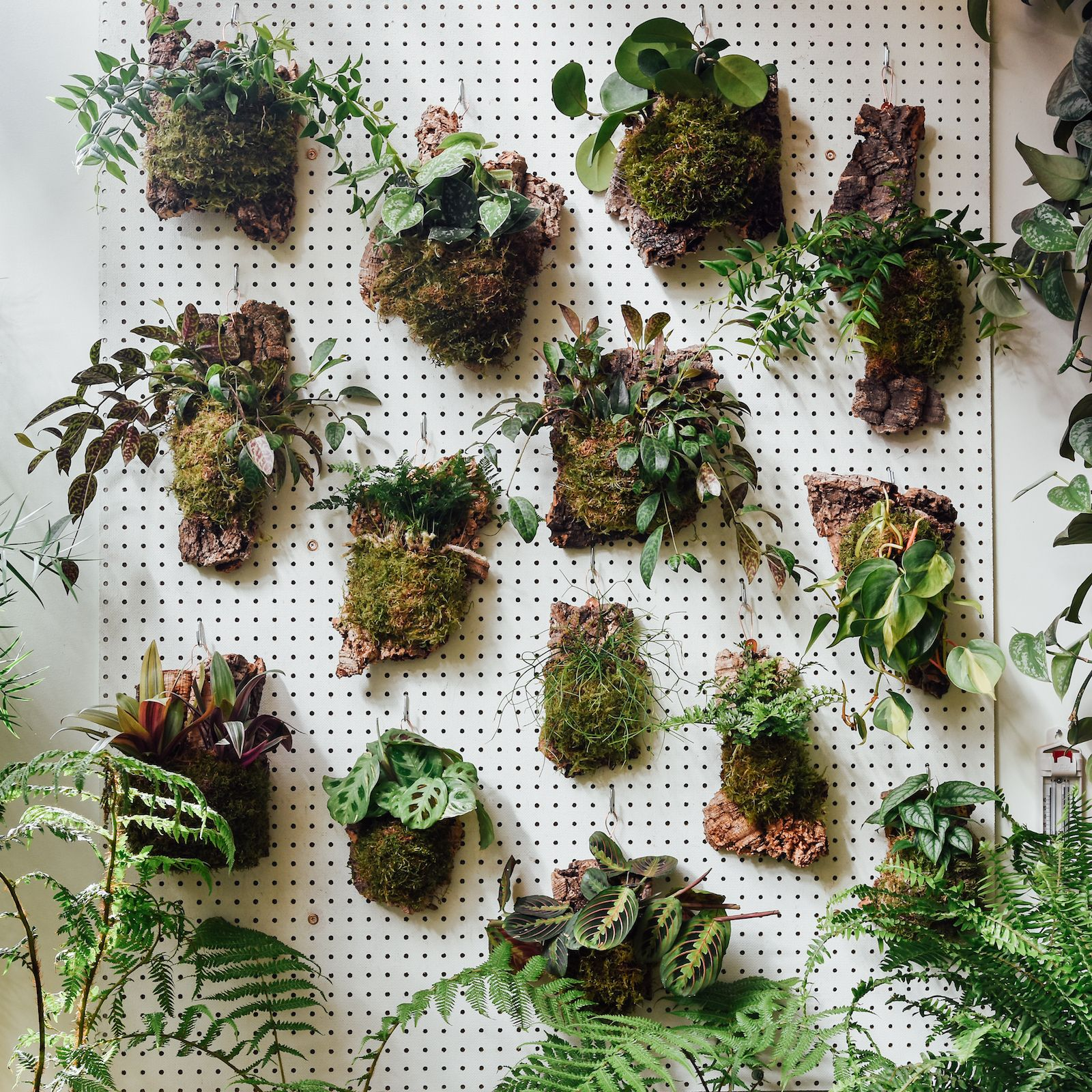 Your Ultimate Guide to Creating a Living Wall