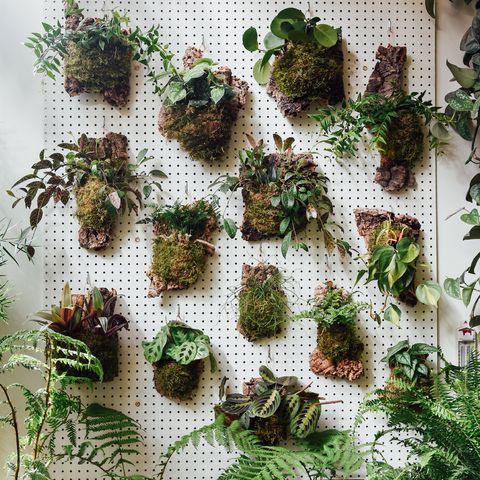 Plant, Non-vascular land plant, Vascular plant, Flower, Herb, Moss, Houseplant, Perennial plant,