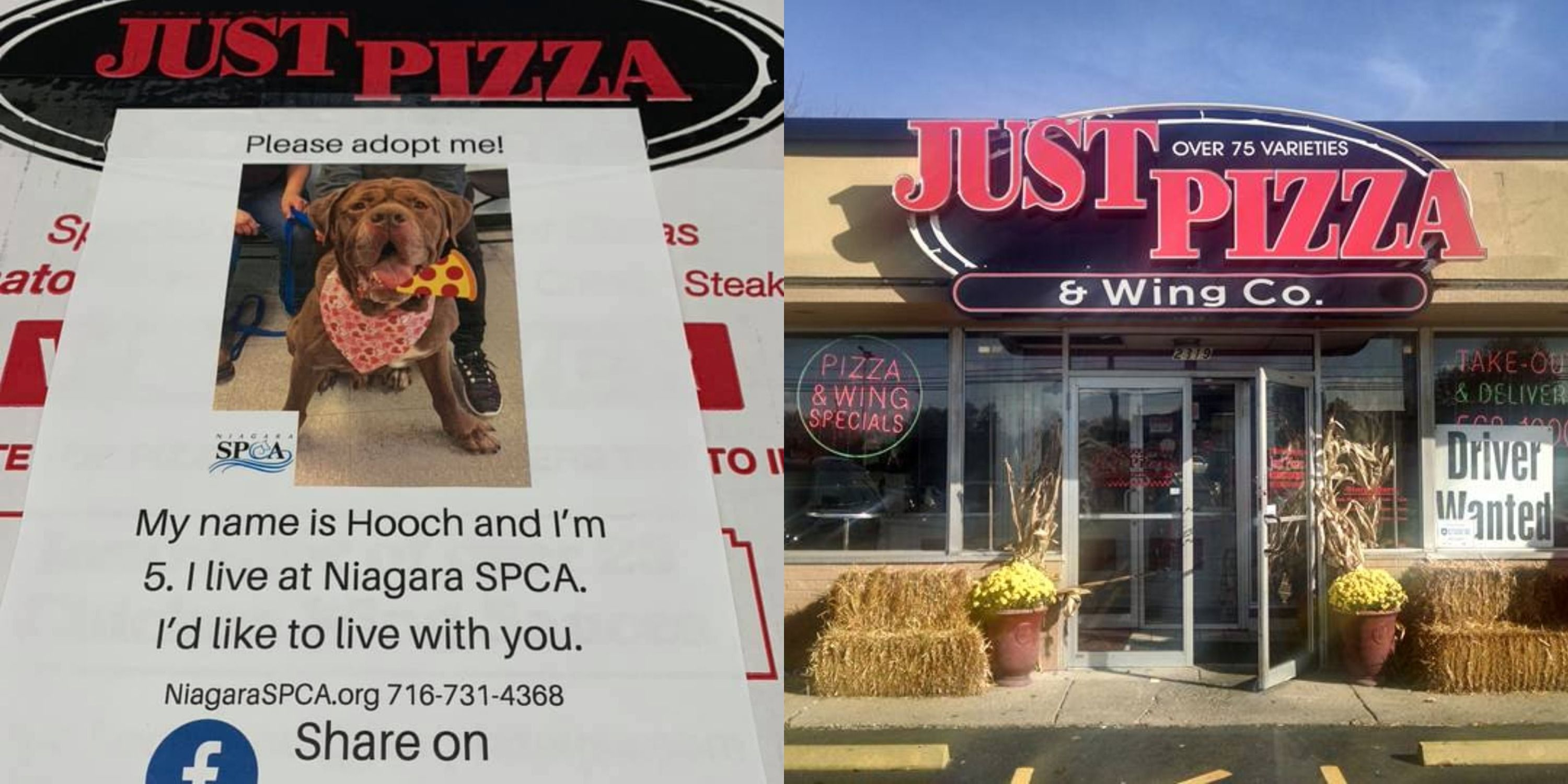 A Pizza Shop Is Attaching Flyers For Adoptable Dogs To Its Boxes