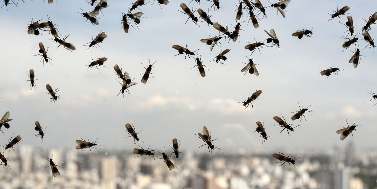 How to Get Rid of Flying Ants in Your Home, According to Pest Experts