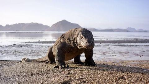 Planeta Tierra II es de las mejores valoradas en imdb