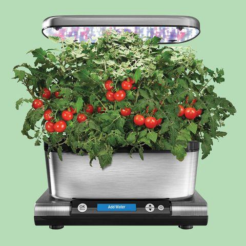 Flowerpot, Plant, Flower, Houseplant, Flowering plant, Shrub, Solanum, geranium, Herb, Wildflower,