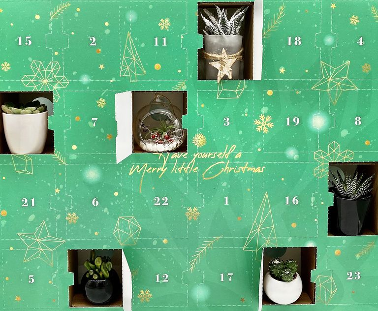 plant-advent-1630060724.jpg?resize=768:*