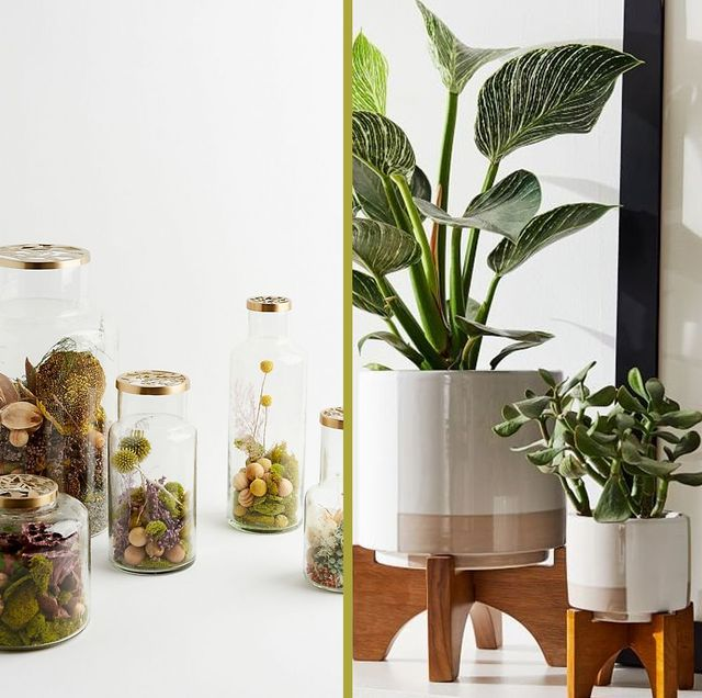 best gifts for plant lovers