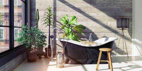 Planten Voor In De Badkamer.Planten In De Badkamer Deze Soorten Zijn Er Geschikt Voor