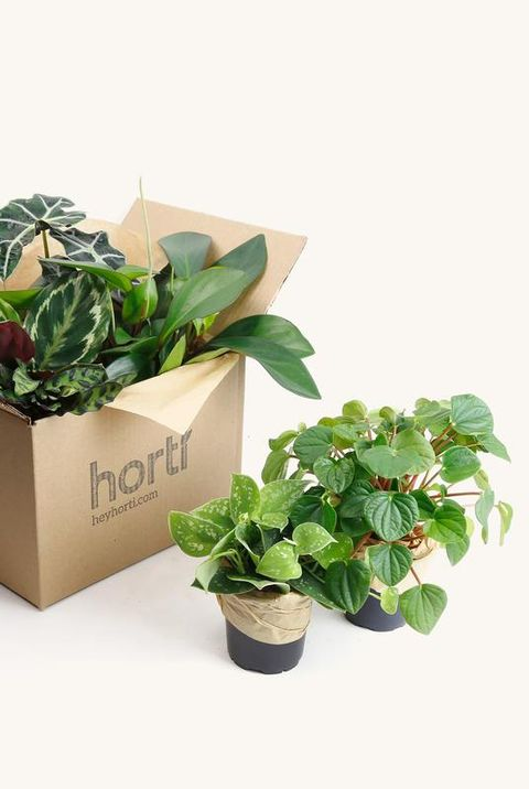 12 Best Plant Delivery Services Online Plant Delivery Companies Changing The Industry
