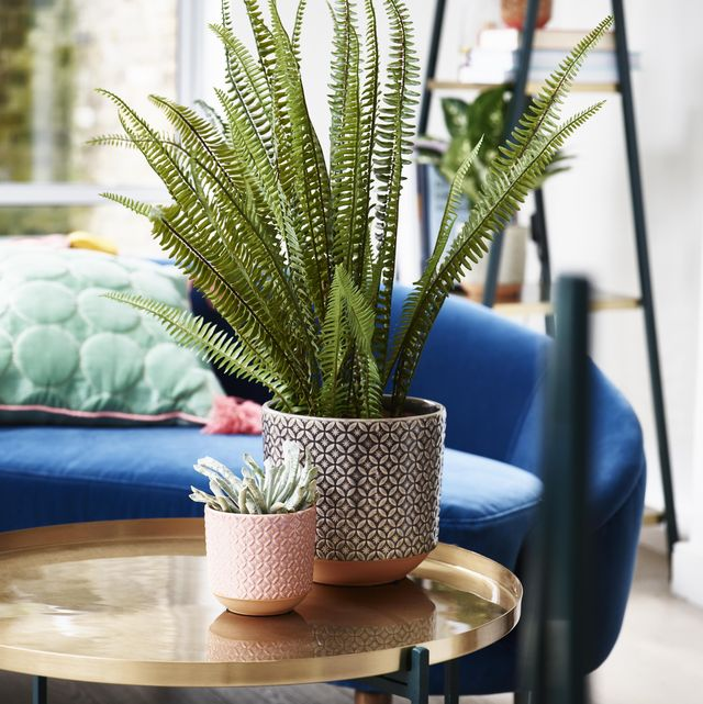 5 easy and essential tips for houseplant beginners