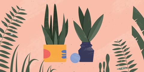 Plants - Magazine cover